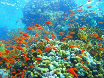 Underwater photo, coral reef