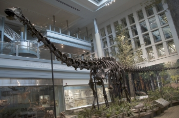 diplodocus 350
