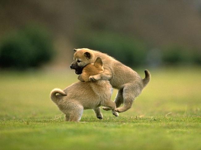 Animals Hugging 08