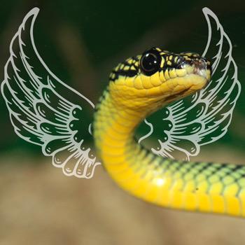 Flying Snakes - Main