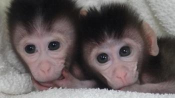 Monkeys Customized Mutations