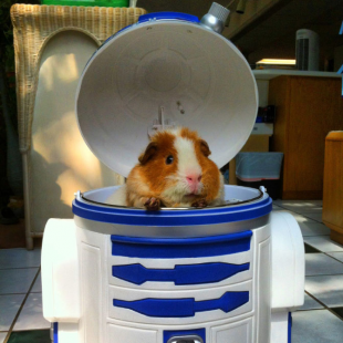 star wars piggy 4