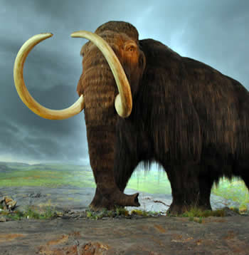 Wooly Mammoth Clones - Main
