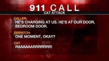 Cat 911 call