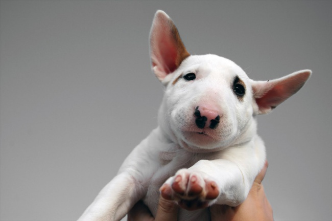 Puppies 03