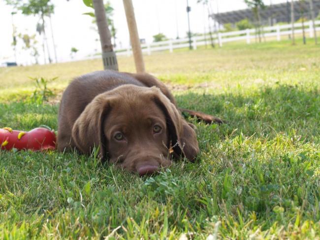 Puppies 04