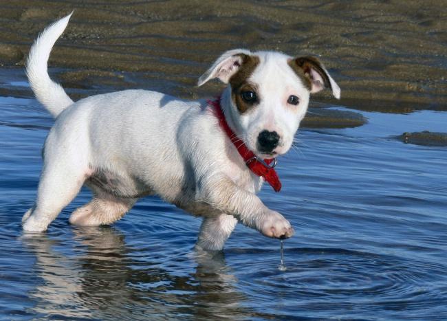 Puppies 05