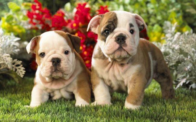 Puppies 06