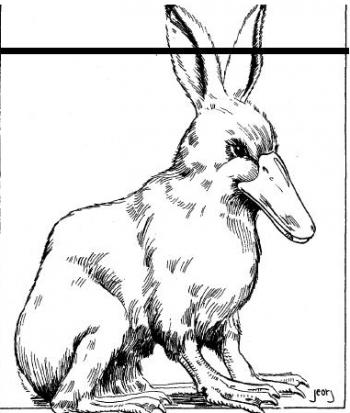 duckbunny