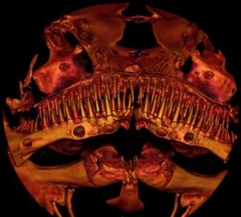 Catfish face 350