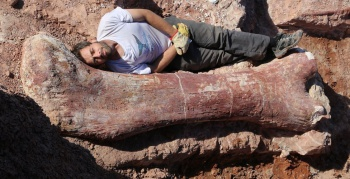 massive dinosaur bones