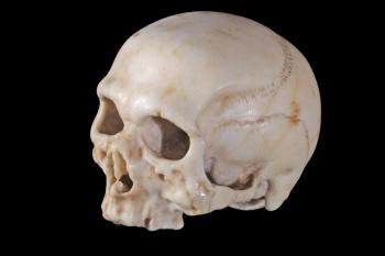 Wired da Vinci Skull 2
