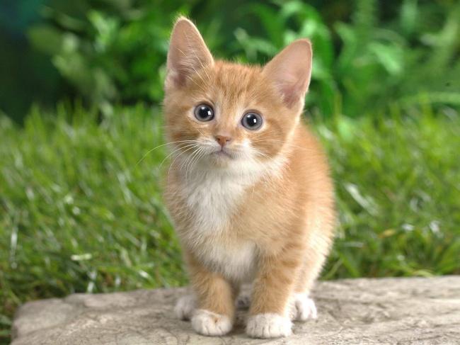 Cute Cats 01