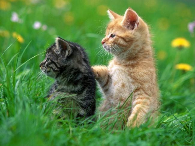 Cute Cats 02