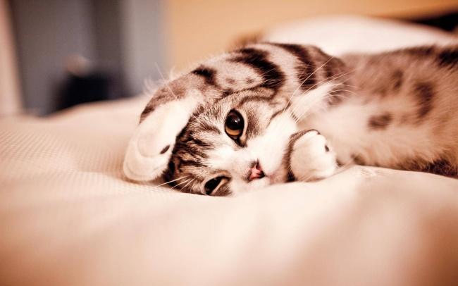 Cute Cats 03
