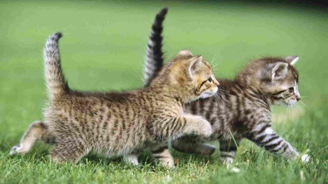 Cute Cats 04