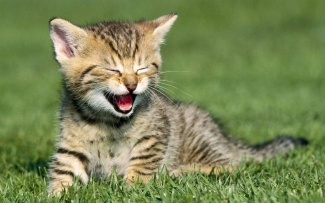 Cute Cats 06
