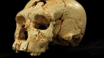 Neanderthal Ancestor Skull
