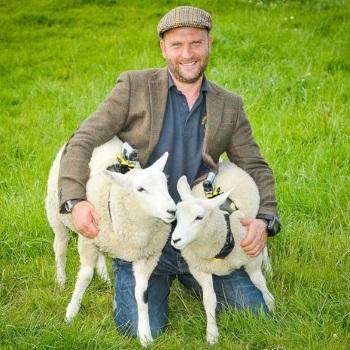 Sheep cams 11