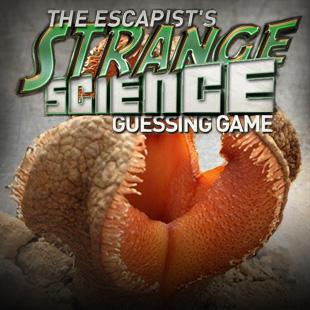 Strange Science 6 3x3