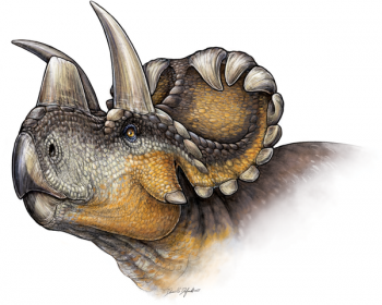 Wendiceratops