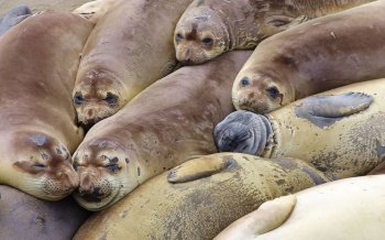 Where to find sources for a scientific paper on sea lions?