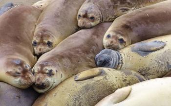 Seals Molt