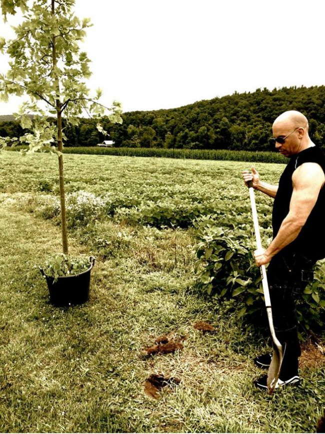 Vin Diesel plant a tree for groot