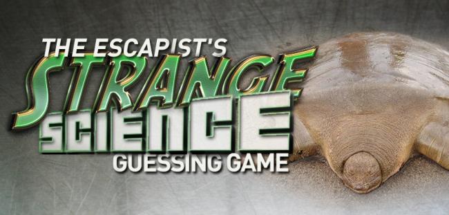 Strange Science 5 social