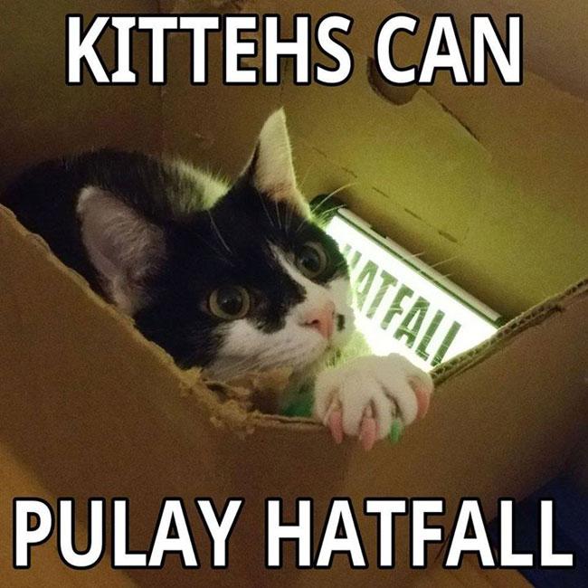 kitteh-hatfall