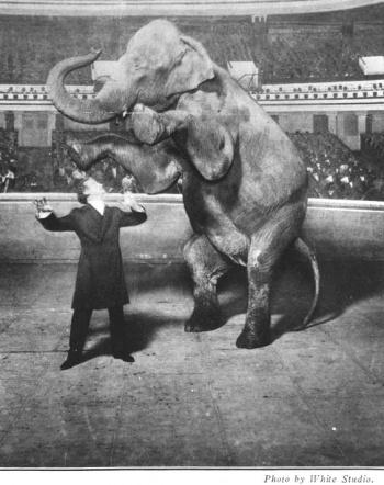 Houdini vanishing elephant in the Hippodrome
